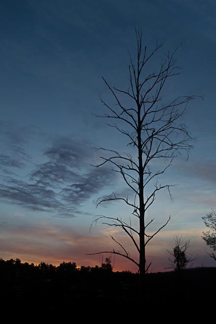 tree-silhouette-sunset