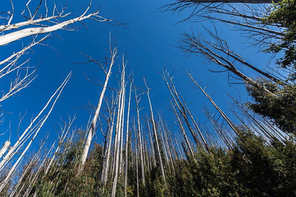 trees-blue-sky-marysville