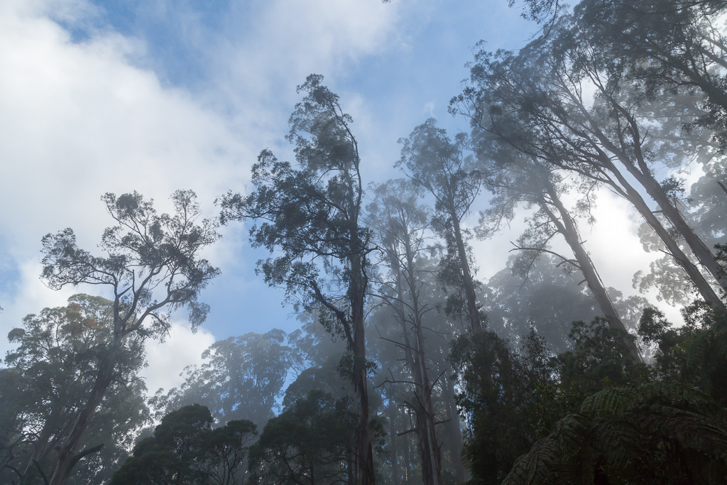 blue-sky-mist-above-trees-dandenong-ranges