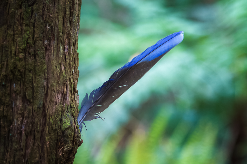 feather-stuck-tree-bark
