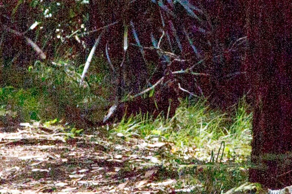 feral-cat-olinda