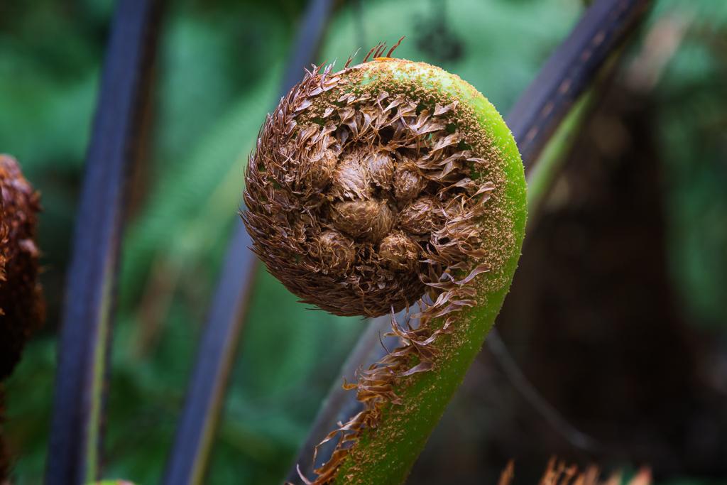 fern-frond