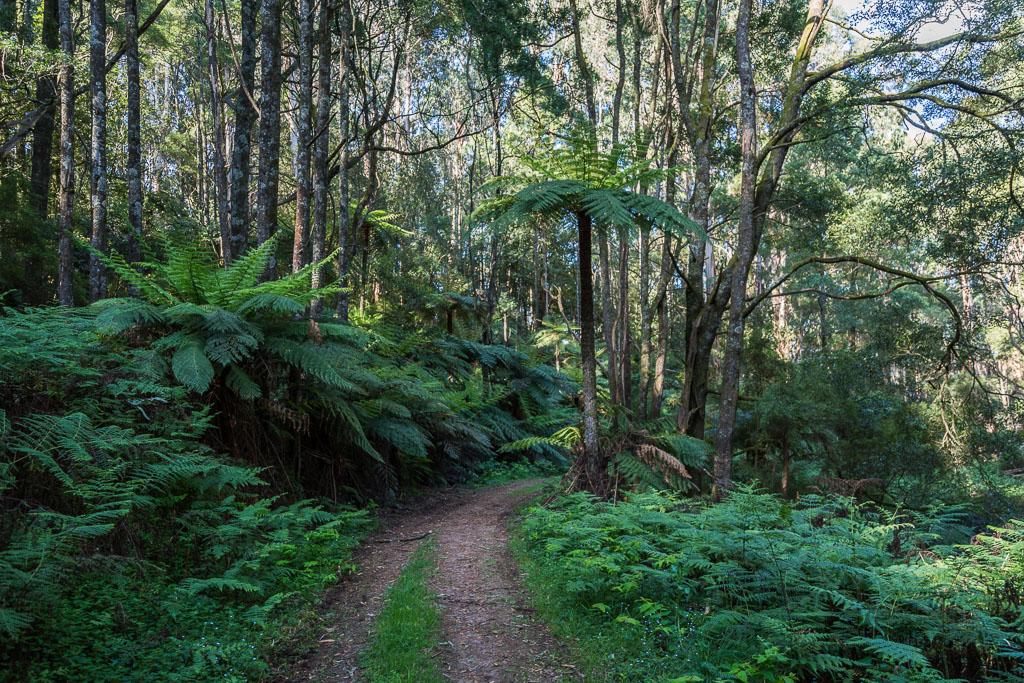 ferns-bartlett-track-olinda