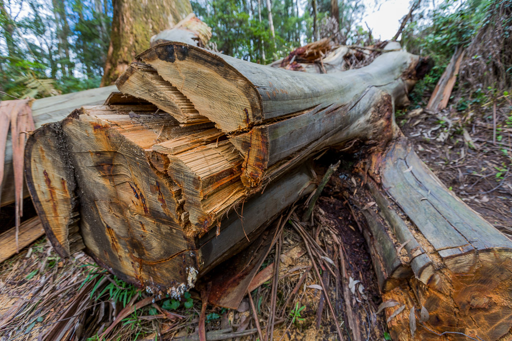 large-fallen-tree-mechanics-track-olinda