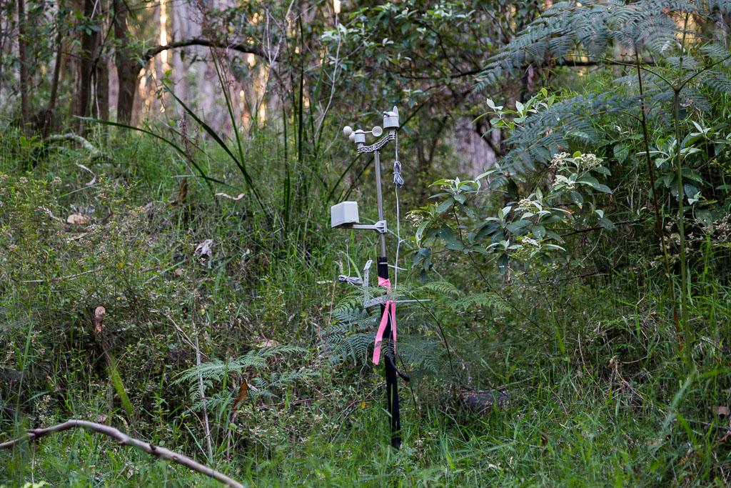 meter-in-forest-olinda