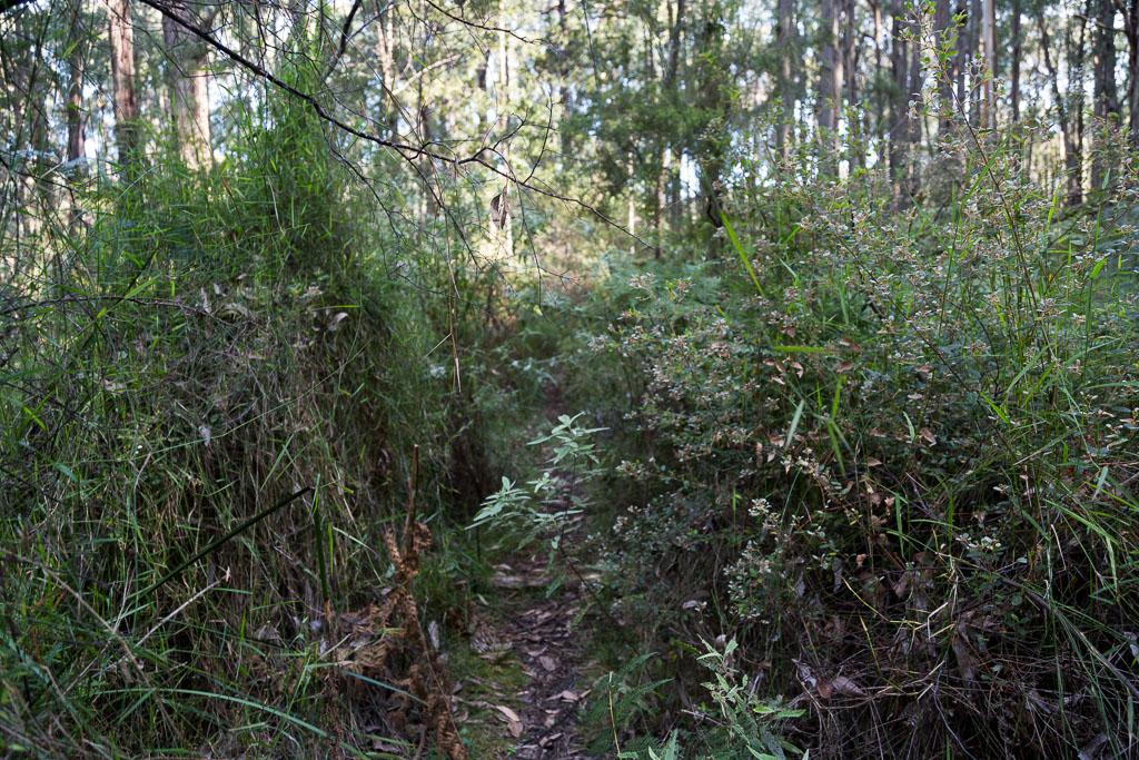 possum-track-olinda