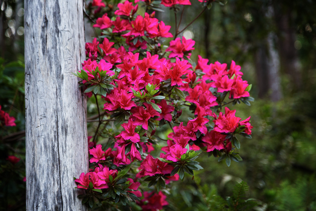 red-flowers-arboretum-olinda-forest