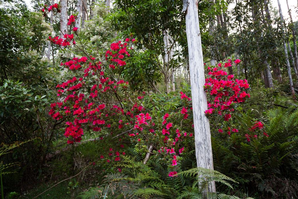 red-flowers-arboretum-olinda