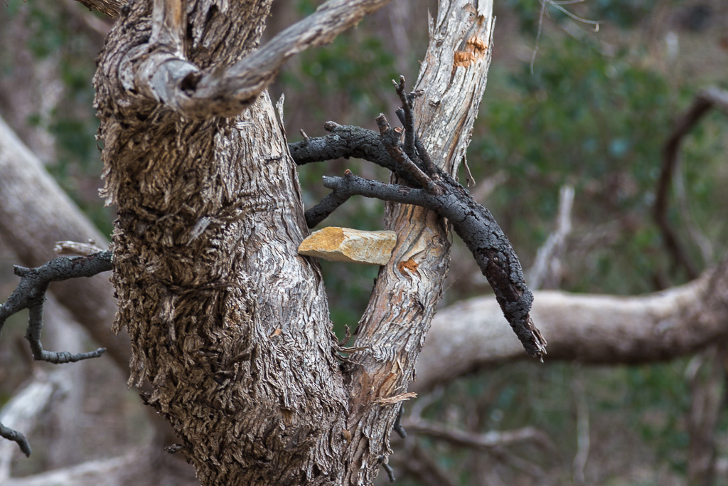 rock-in-tree-fork
