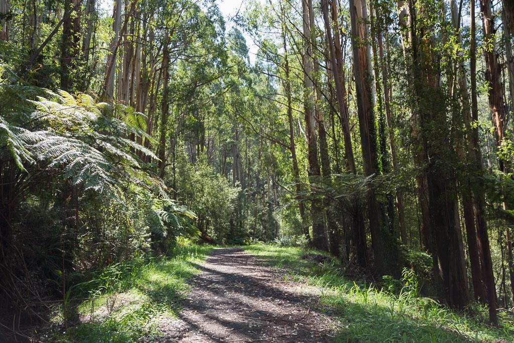 sequoia-track-olinda