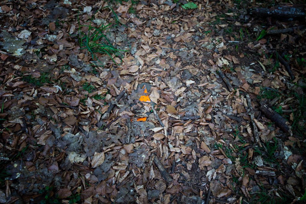 track-marker-in-leaves-olinda-forest