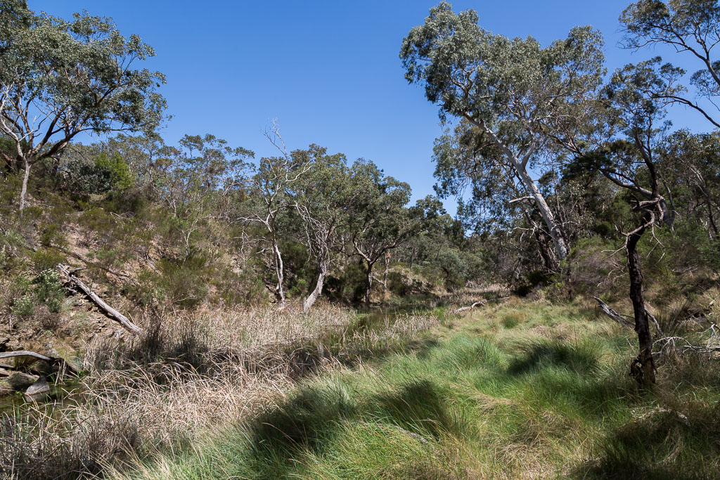 trees-along-side-comaidai-creek