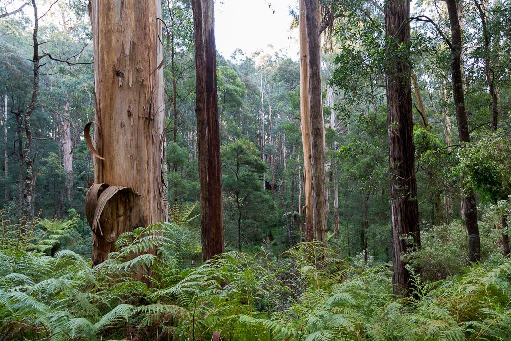trees-ferns-olinda