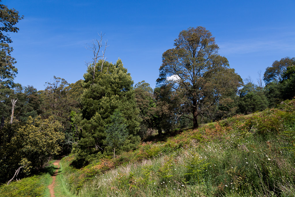 trees-walking-track-olinda