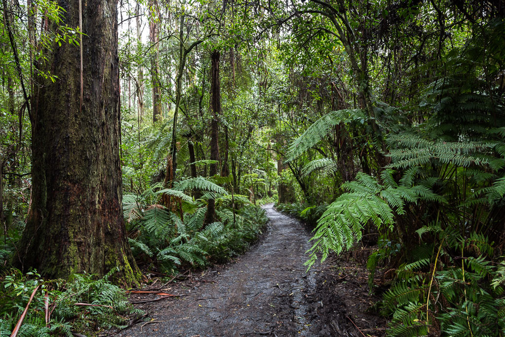 walking-track-sherbrooke-forest-dandenong-ranges