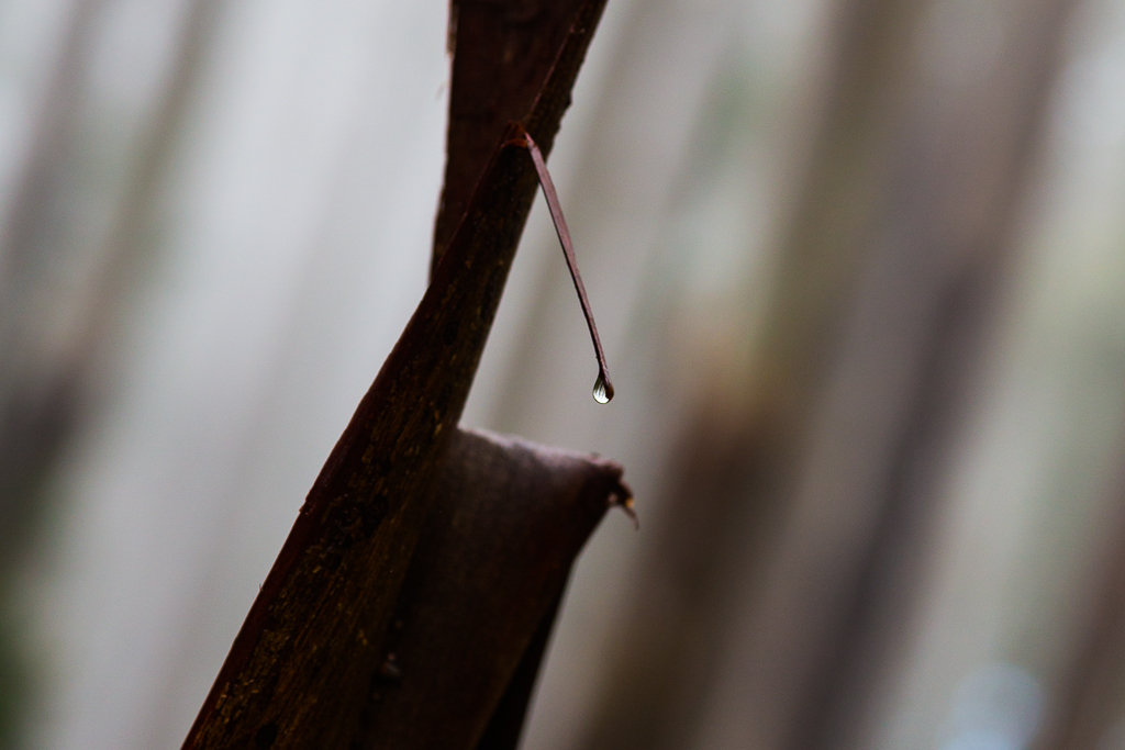 water-drop-broken-branch-dandenong-ranges