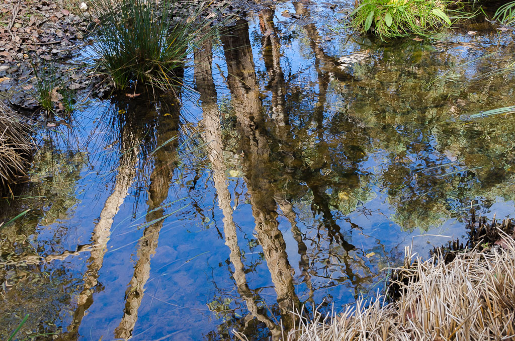 water-reflections-coimadai-creek