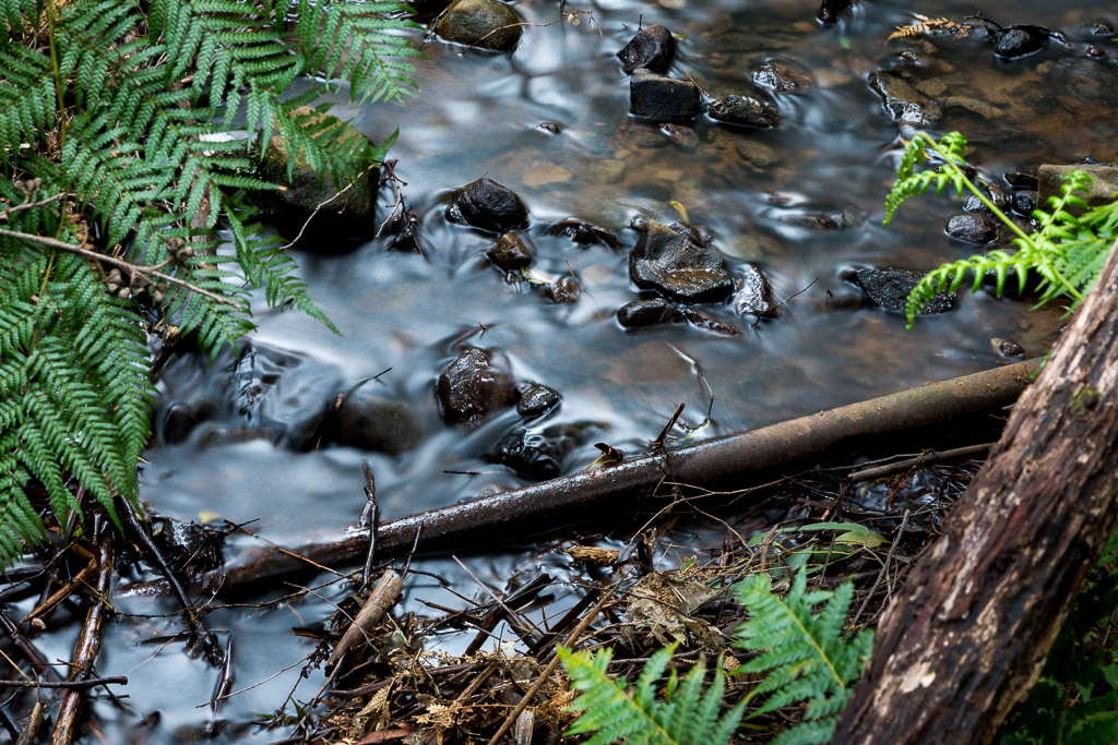water-small-creek-olinda