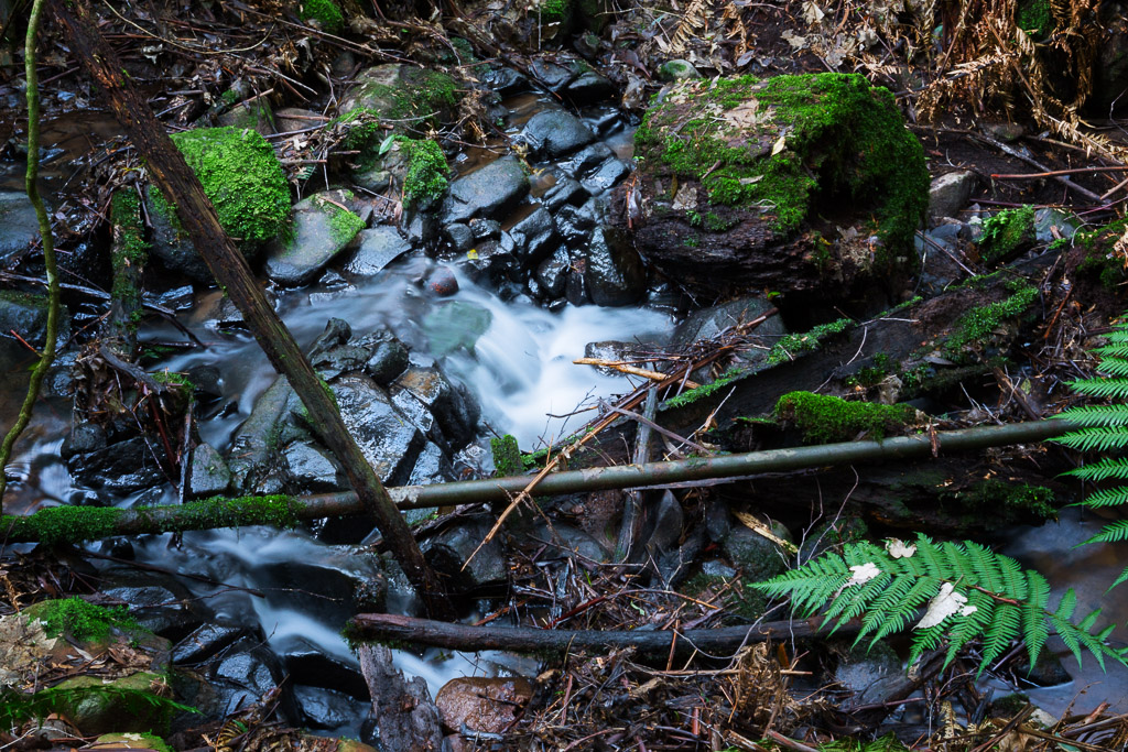 water-small-creek-track-olinda