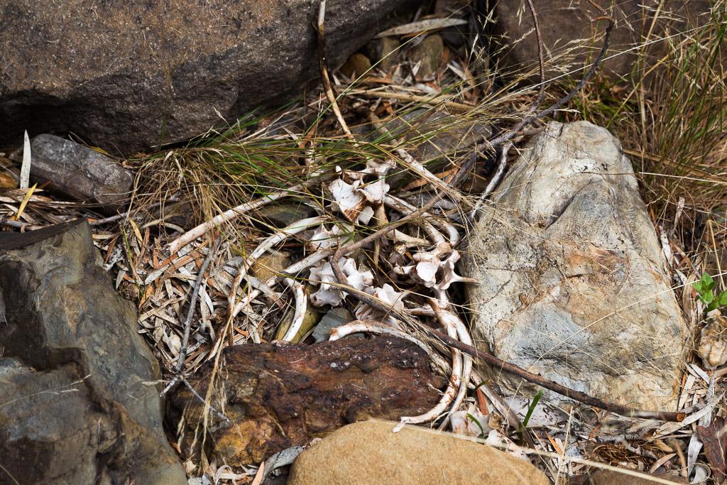 bones-amongst-rocks-steiglitz