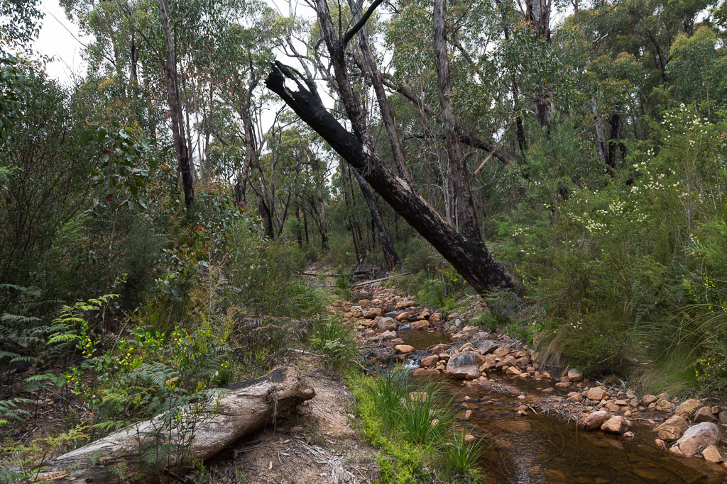 creek-grampians