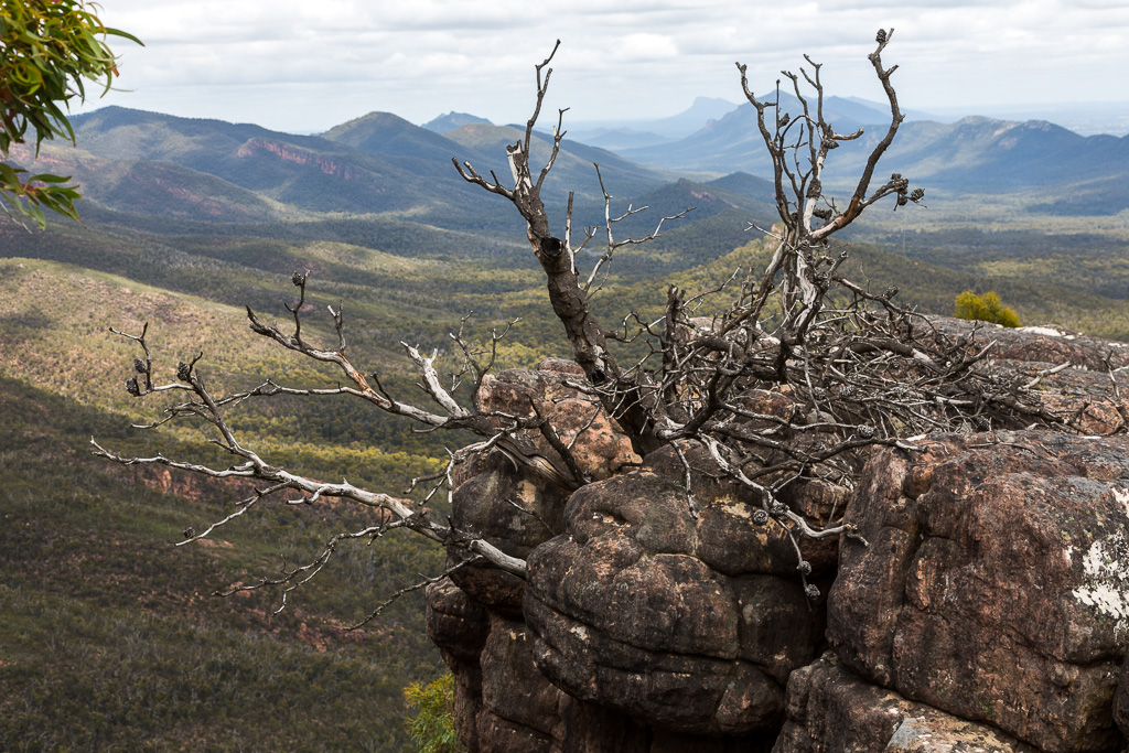 dead-tree-in-rocks-cathedral-rock-grampians
