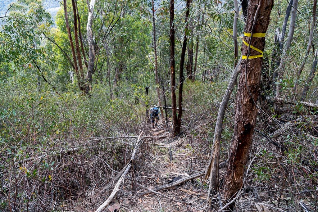descending-bush-track-cathedral-rock-grampians