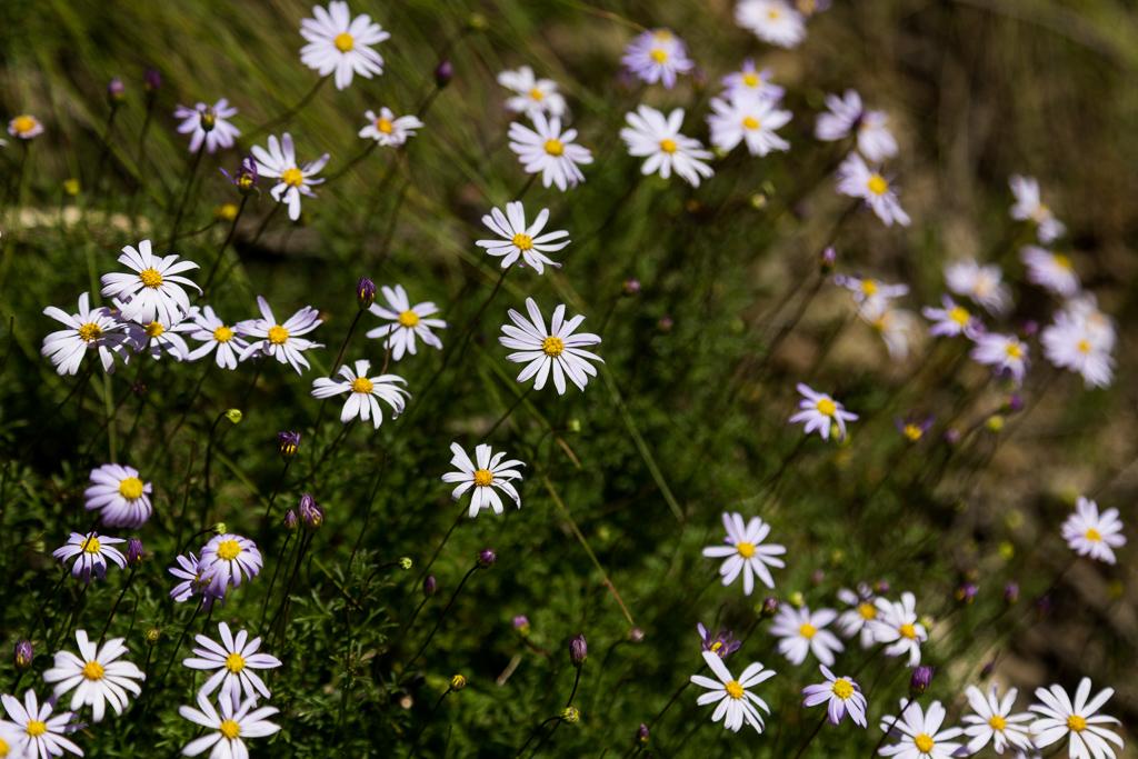 flowers-pyrete-range