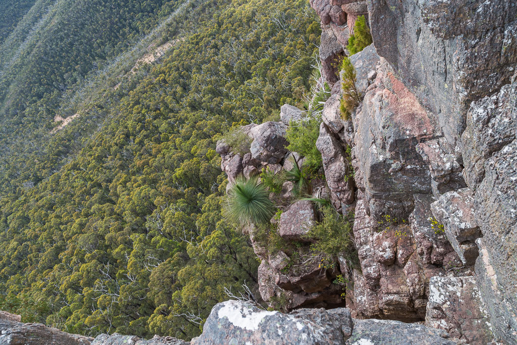 grass-tree-ledge-cathedral-rock-grampians