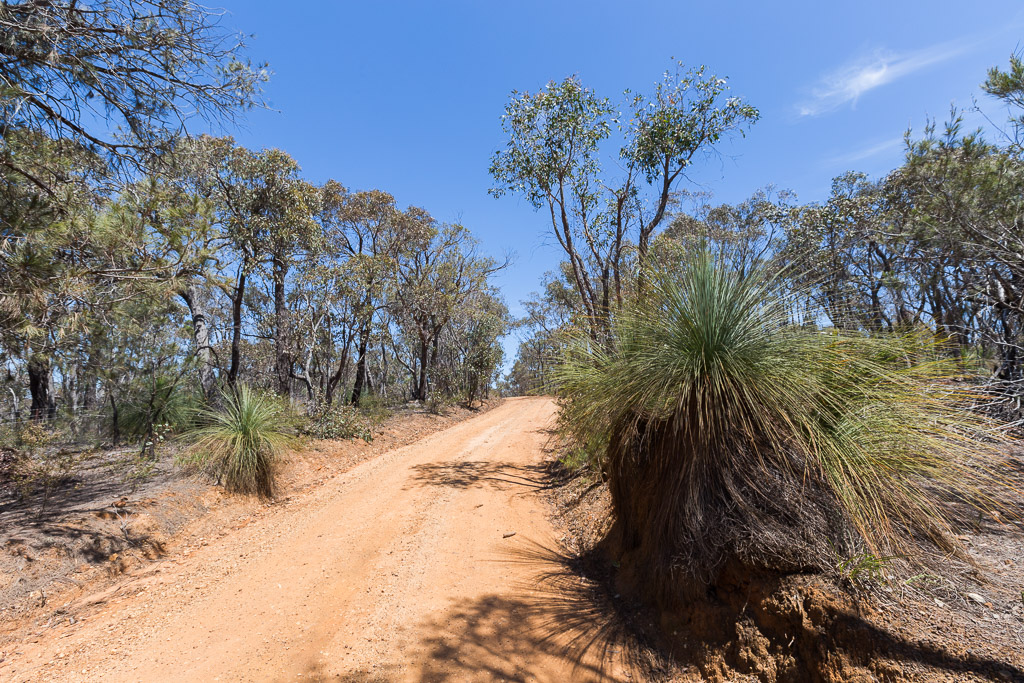 grass-tree-south-steiglitz-road