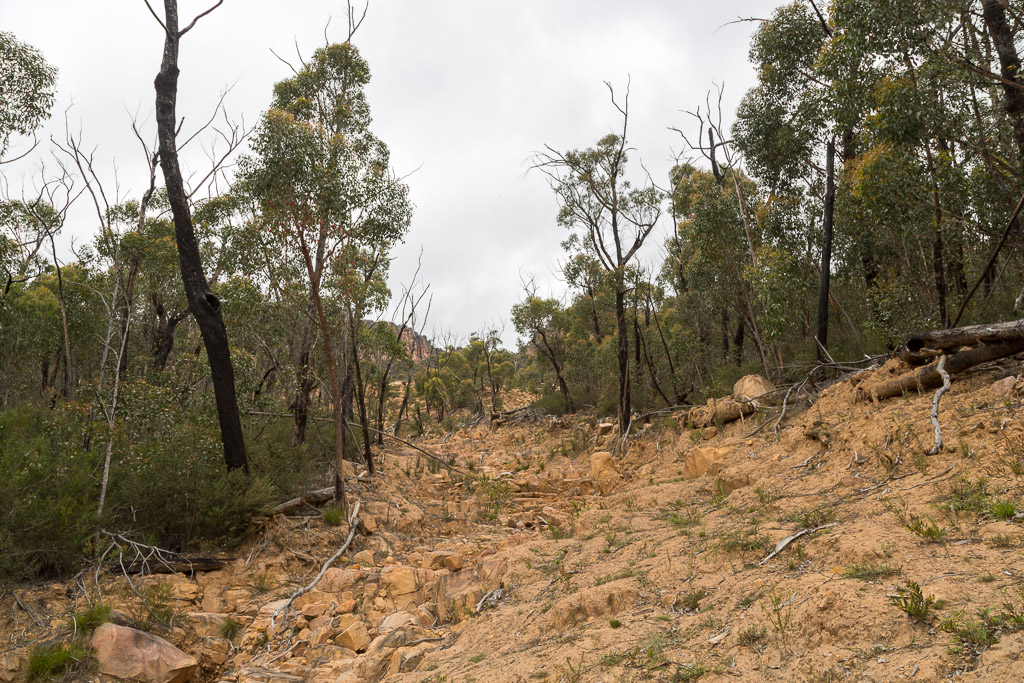 mark-mud-from-land-slip-against-tree-grampians