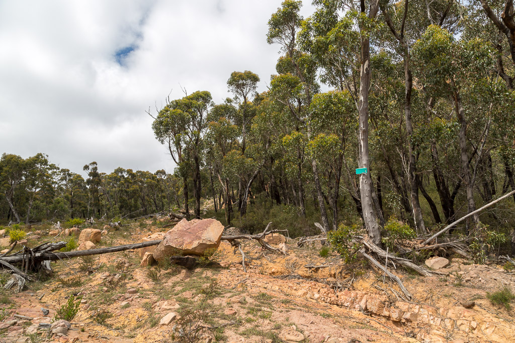 marker-on-tree-cathedral-rock-grampians