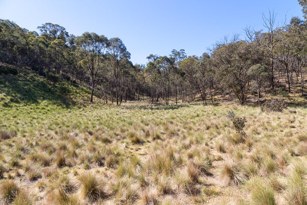 open-grass-area-pyrete-range