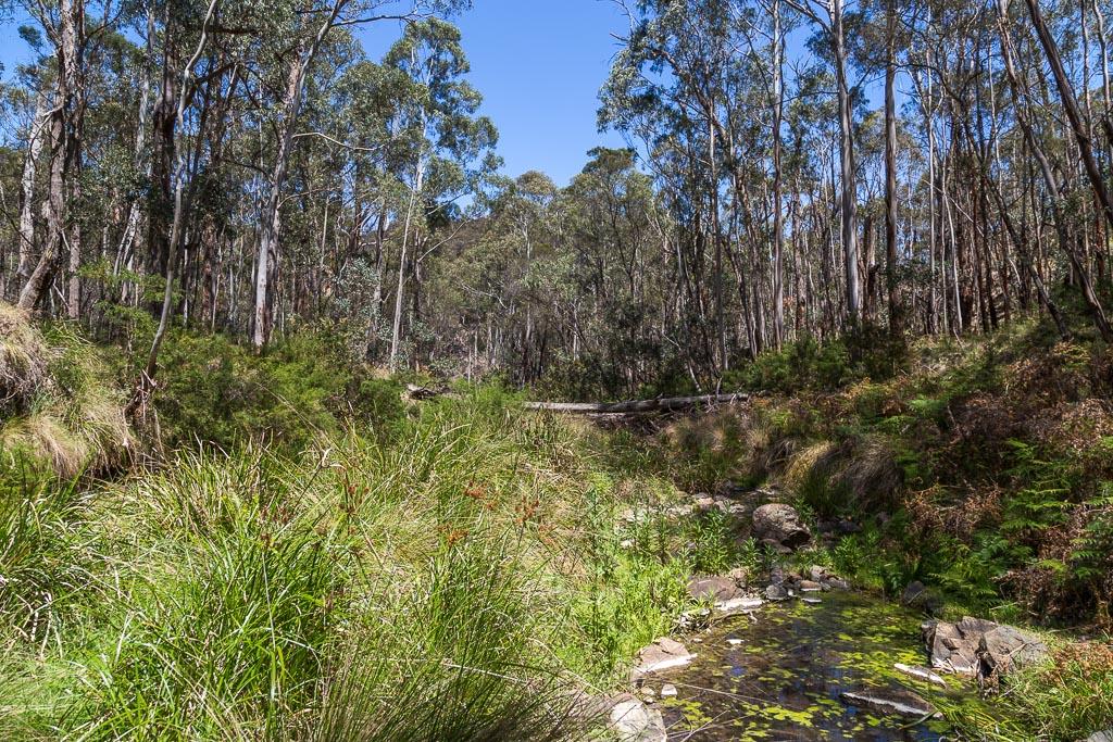 reeds-in-pyrites-creek