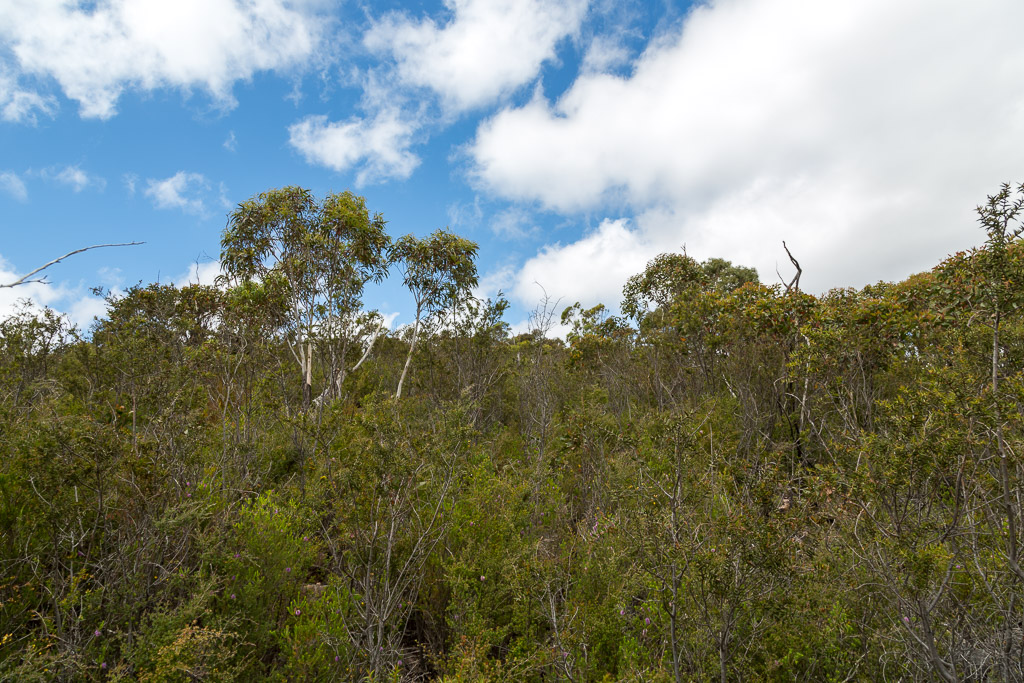 scrub-atop-cathedral-rock-grampians