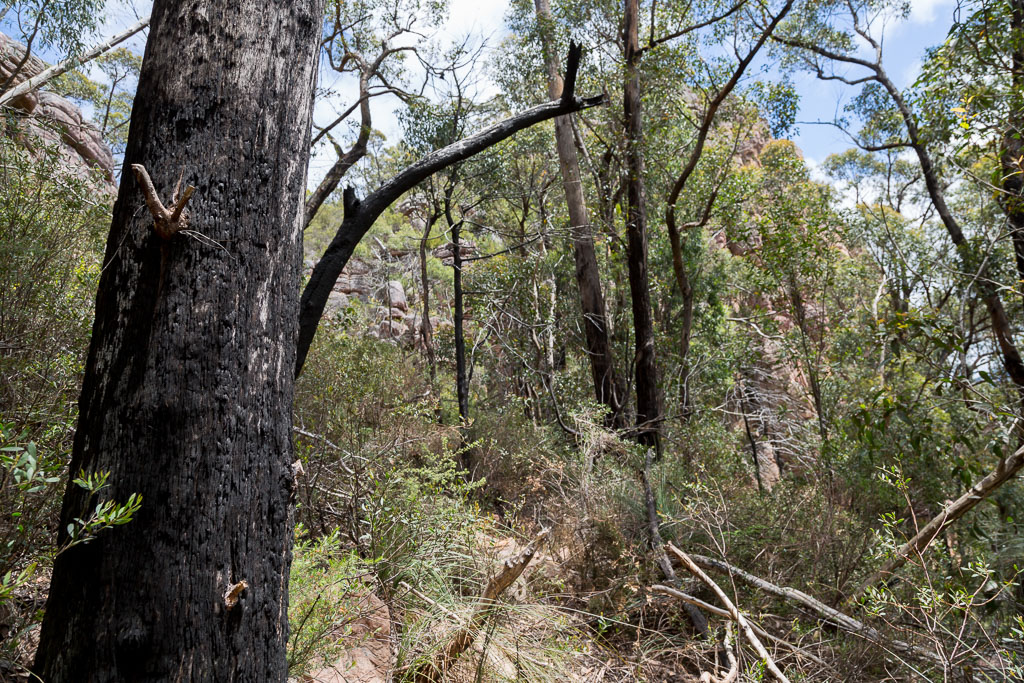 scrub-below-cathedral-rock-grampians