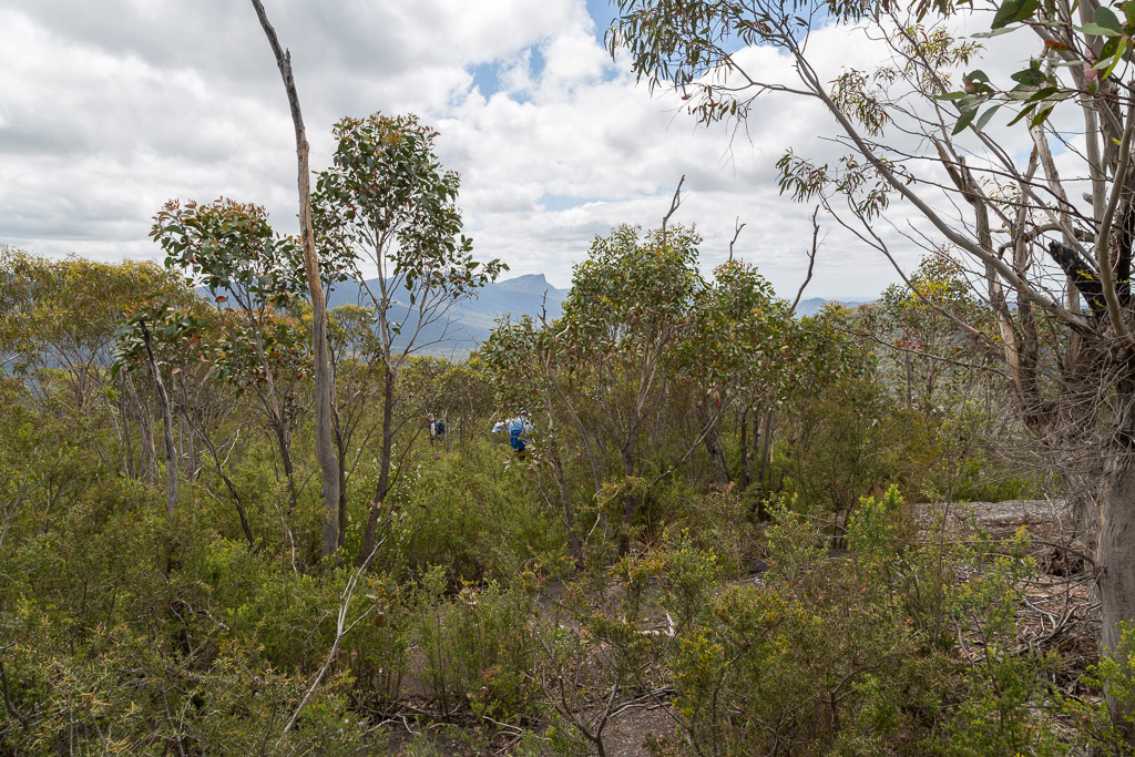 scrub-cathedral-rock-grampians