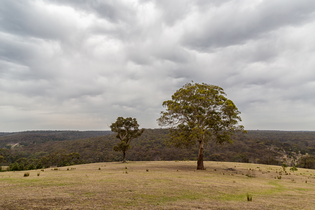 tree-paddock-dark-clouds-steiglitz