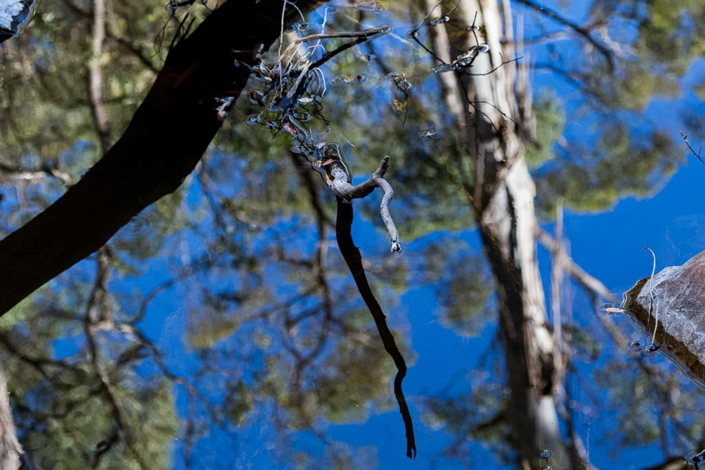 branch-sky-reflected-in-water
