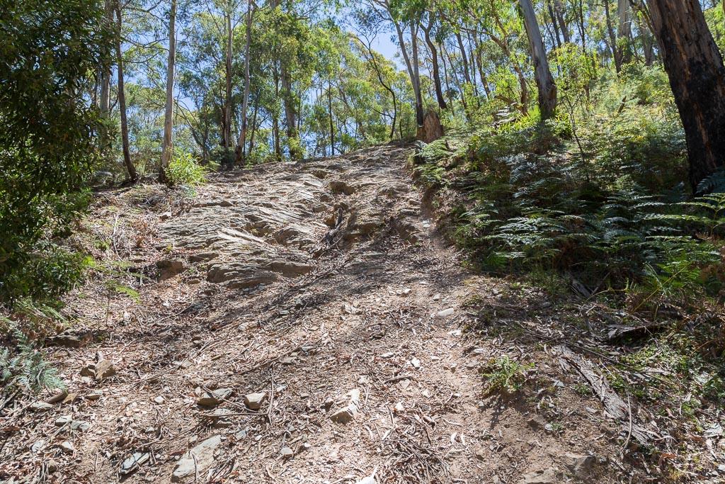 steep-track-sardine-creek-lerderderg-state-park
