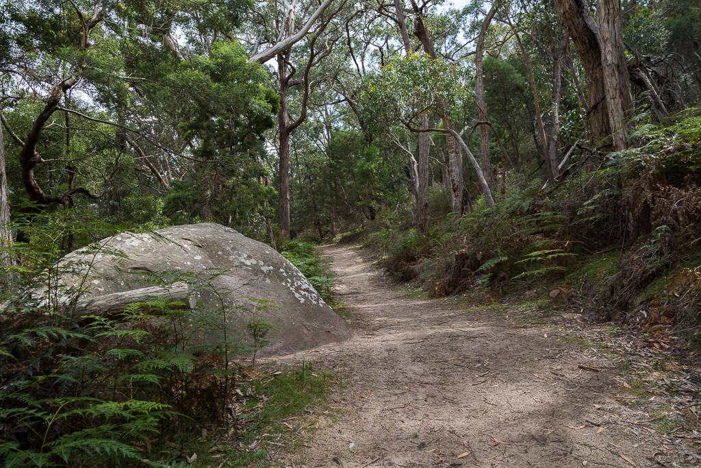 boronia-peak-walking-track-grampians