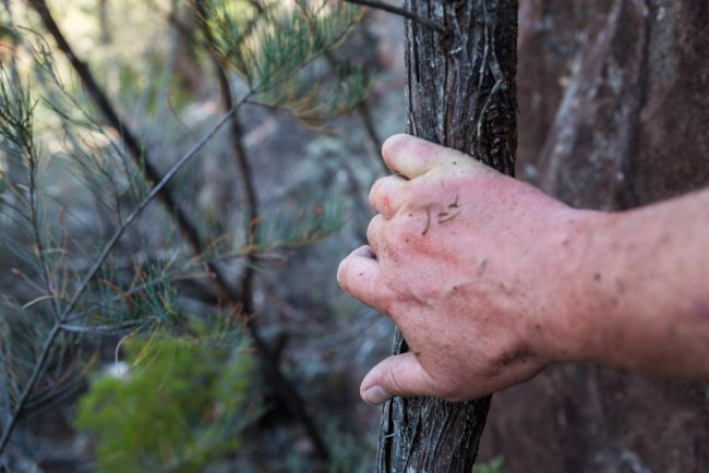 holding-branch-hakea-scrub-mount-william-range-grampians