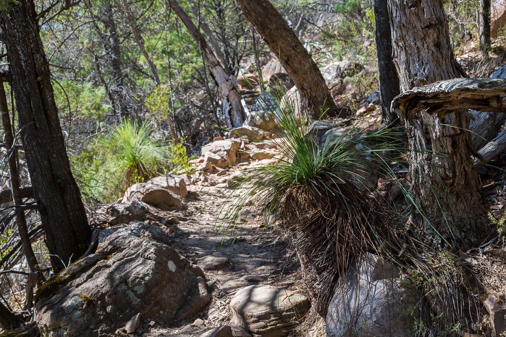 grass-tree-walking-track-boronia-peak-grampians