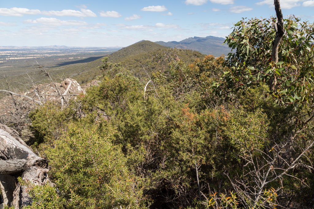 hakea-scrub-mount-william-range-grampians