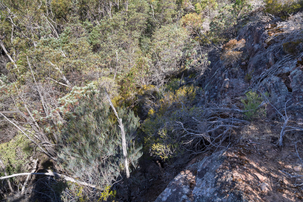 scrub--mount-william-range-ridge-grampians