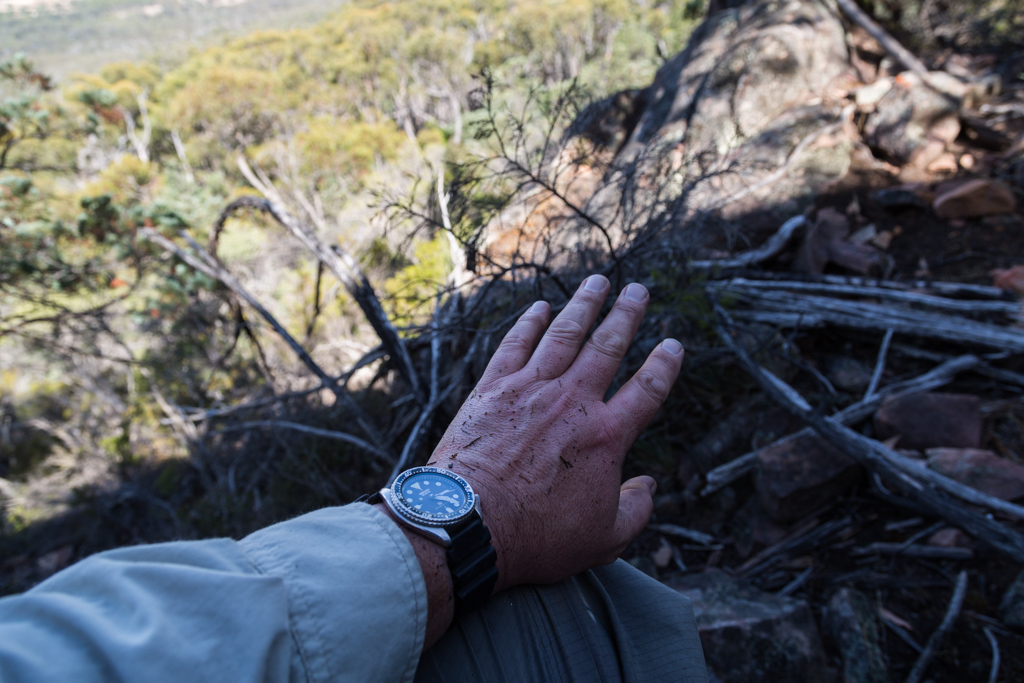 sitting-scrub-mount-william-range-grampians