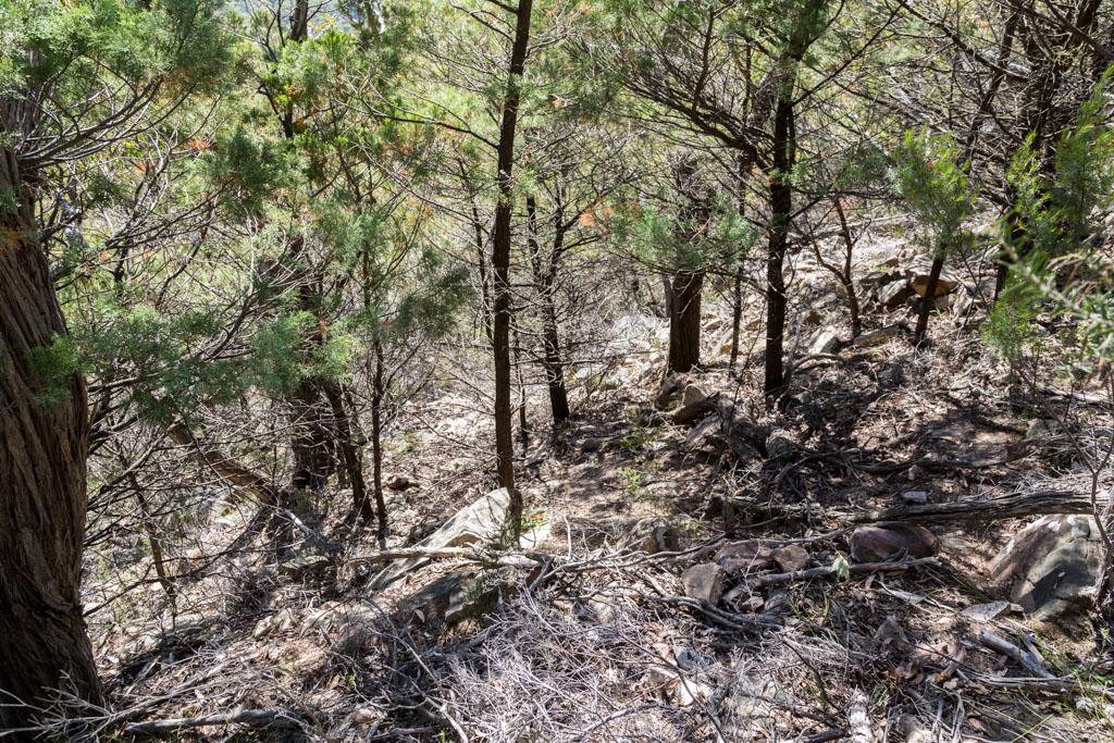 steep-descent-from-mount-william-range-ridge-grampians