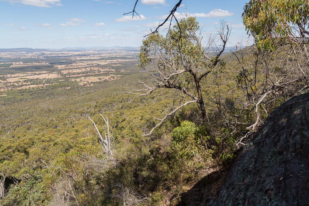 trees-scrub-on-east-mount-william-range