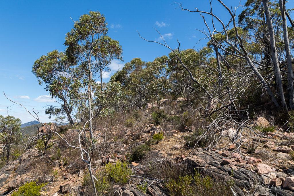 trees-scrub-on-mount-william-range