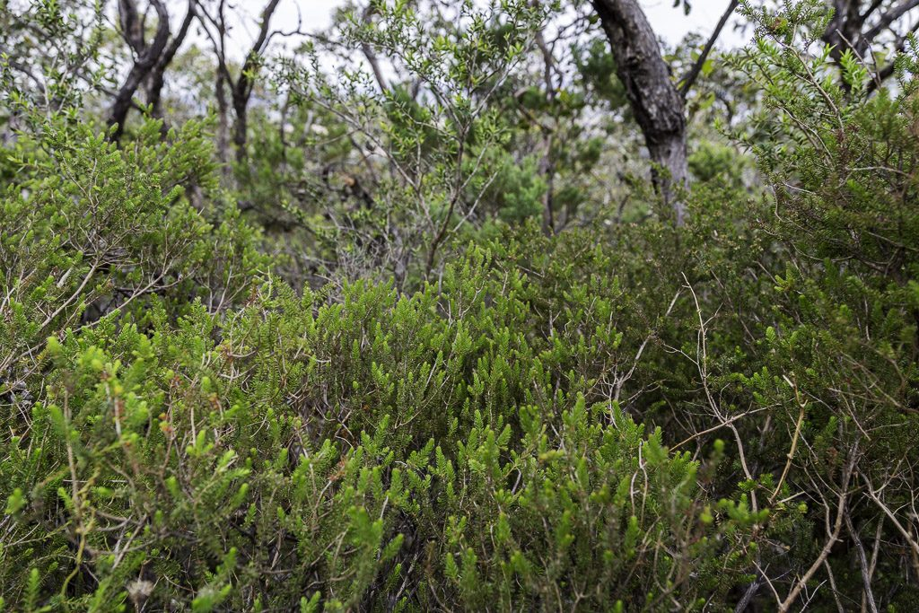 bush-signal-peak-grampians-national-park